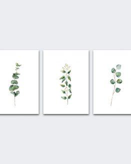 Eucalyptus Canvas Prints