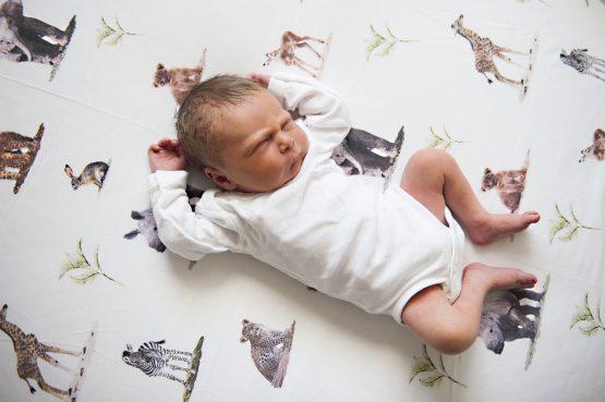Bush Baby Safari Swaddle Background
